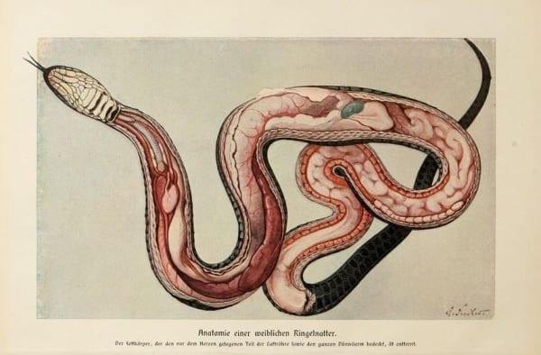"""Каркас змеи: чешуя отграничивает внутреннее от внешнего, тело от среды, но в то же время позволяет """"стать средой"""""""